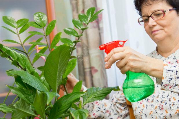 Senior Hobby Idea: Caring for Indoor Plants